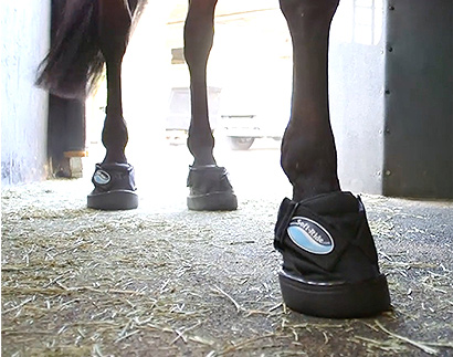 Equine Boots for Trailers and Transportation